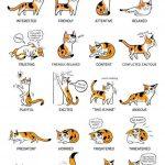 3d4cbedf61d89525e736581248b4f18b e1601807701758 150x150 - Cat Language !
