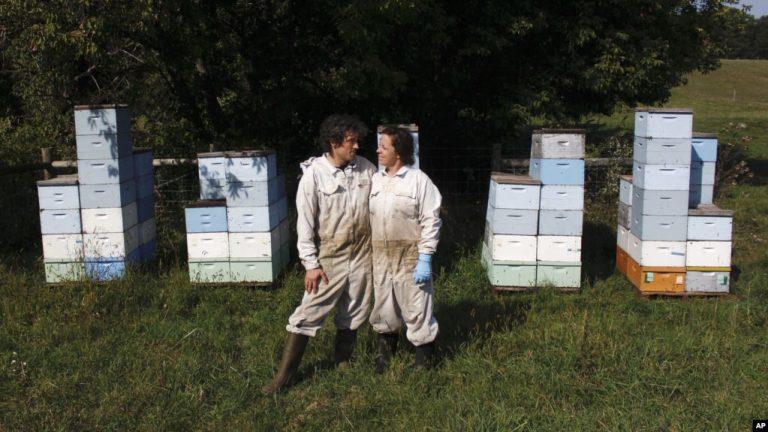 Husband Wife Beekeepers Start Business During Pandemic  s 768x432 - اربیتاس  : جامعهی مجازی تجربه و یادگیری زبان انگلیسی