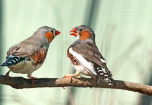 birds sing to their eggs and this song might help their babies survive climate change 5fb5ed2e47a1d 300x208 - اربیتاس : جامعهی مجازی تجربه و یادگیری زبان انگلیسی