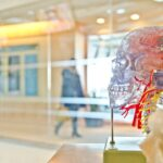 the empty brain 5fb5ea5c8f66e 150x150 - The Empty Brain